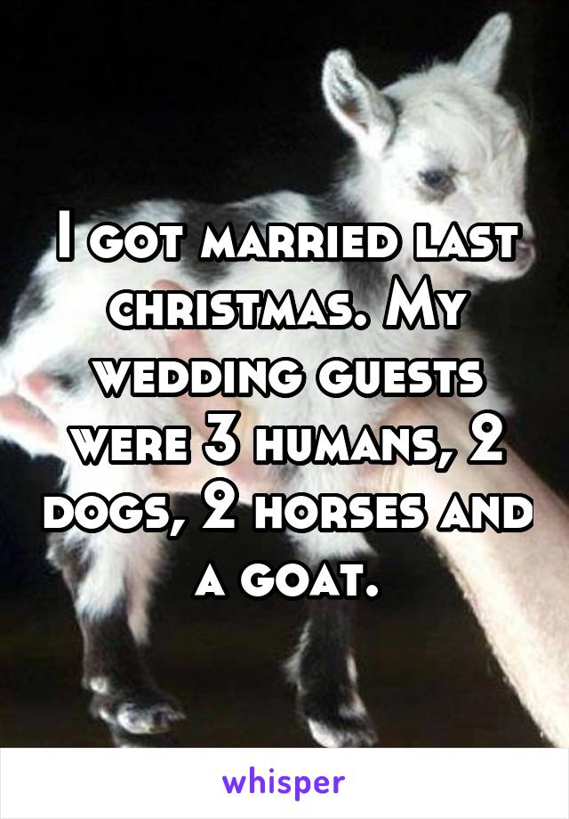 I got married last christmas. My wedding guests were 3 humans, 2 dogs, 2 horses and a goat.