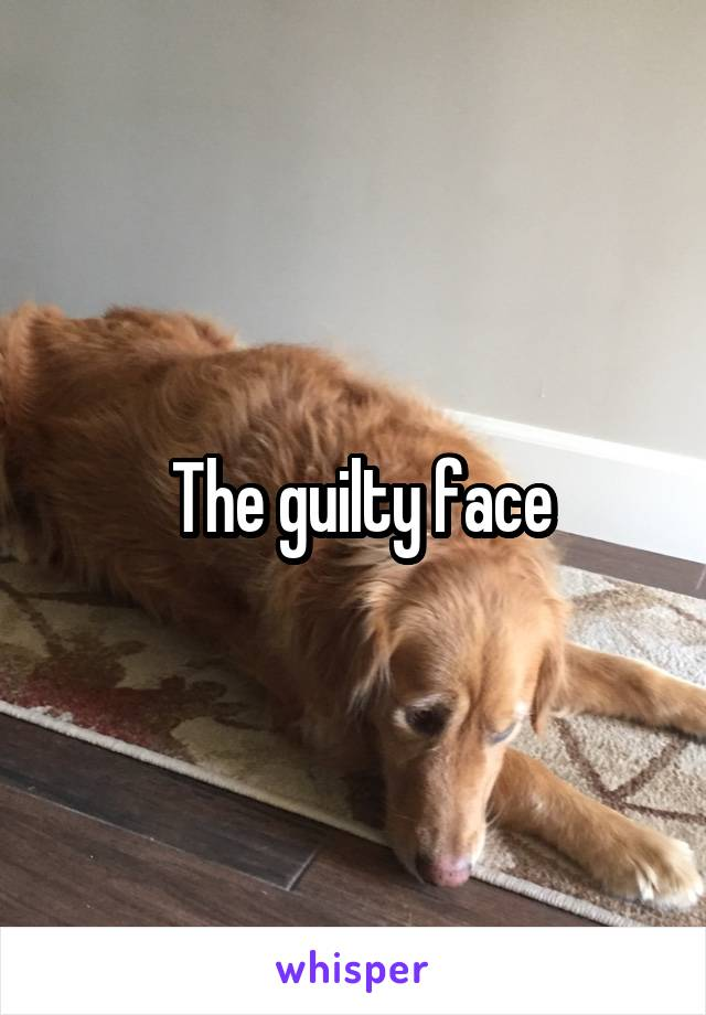 The guilty face
