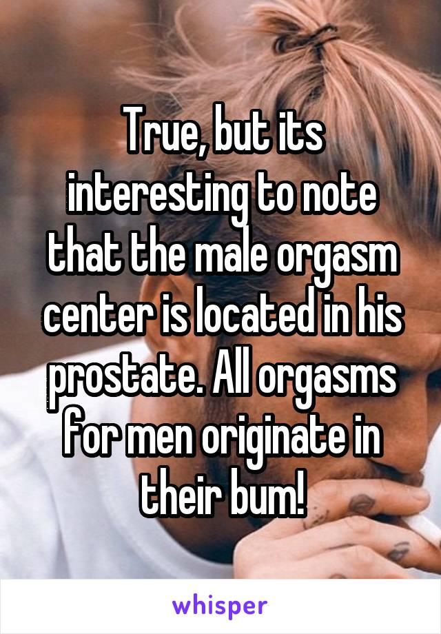 where is an orgasm located photos