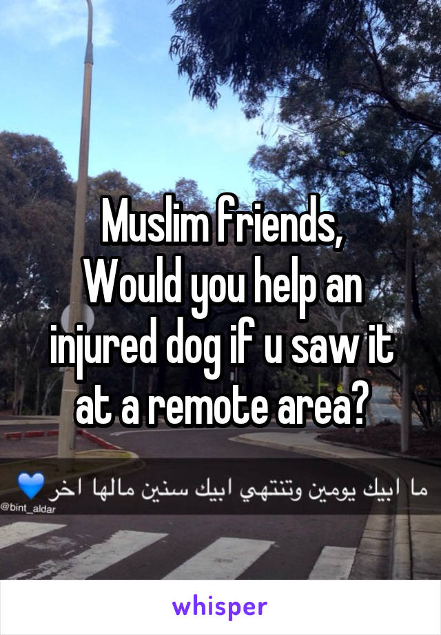 Muslim friends, Would you help an injured dog if u saw it at a remote area?