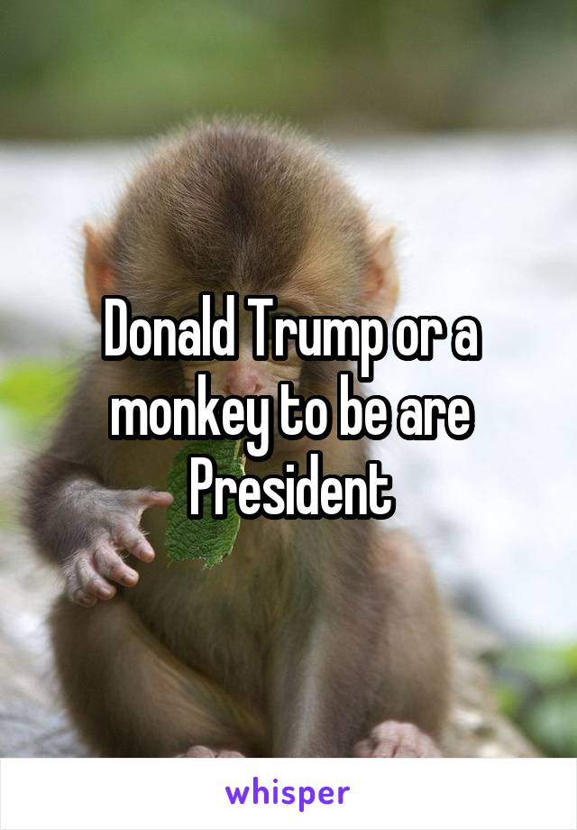 Donald Trump or a monkey to be are President