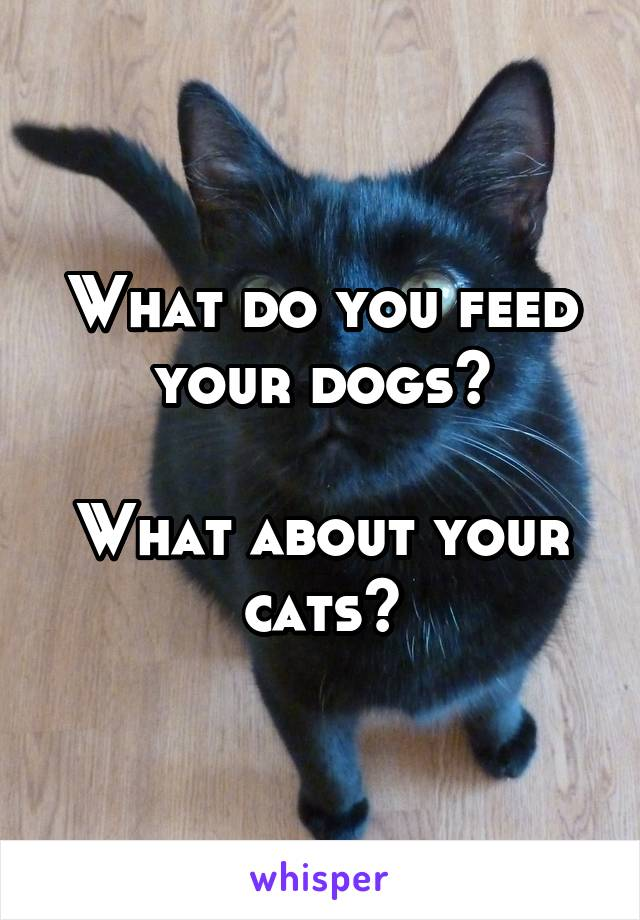 What do you feed your dogs?  What about your cats?