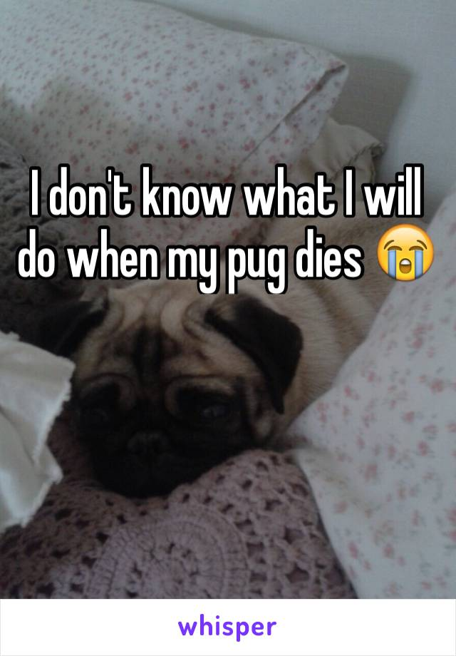 I don't know what I will do when my pug dies 😭