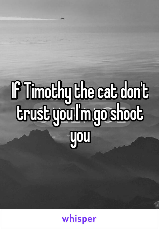 If Timothy the cat don't trust you I'm go shoot you