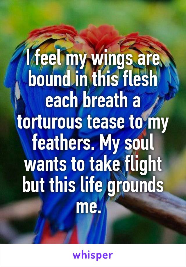 I feel my wings are bound in this flesh each breath a torturous tease to my feathers. My soul wants to take flight but this life grounds me.