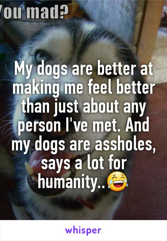 My dogs are better at making me feel better than just about any person I've met. And my dogs are assholes, says a lot for humanity..😂