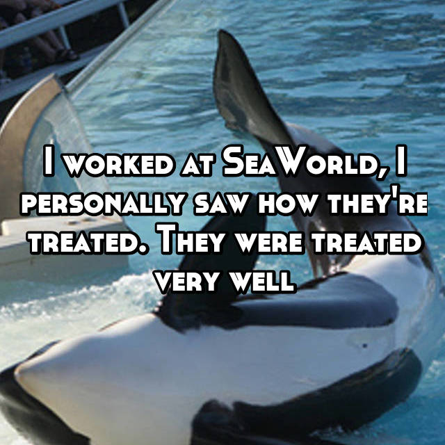 I worked at SeaWorld, I personally saw how they're treated. They were treated very well