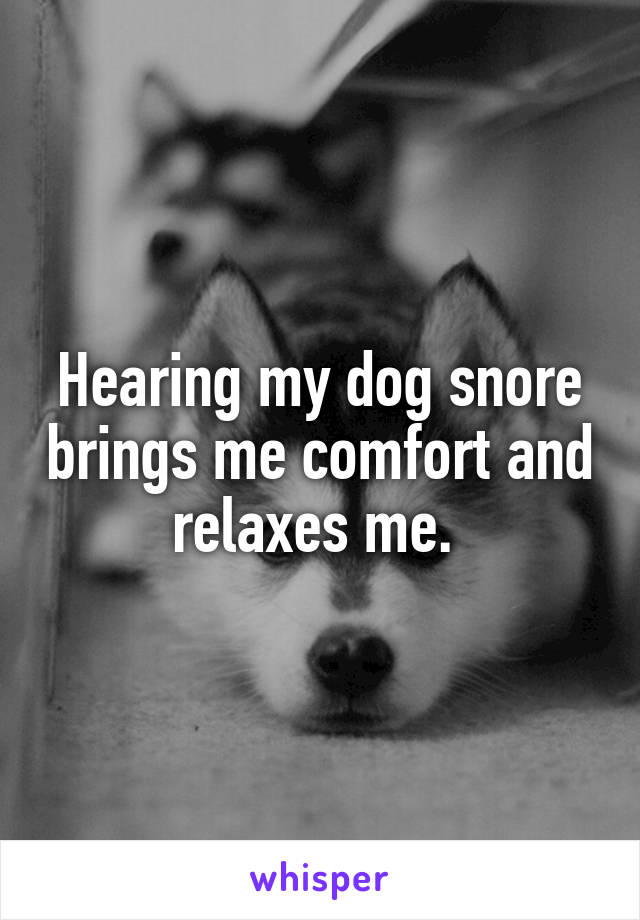 Hearing my dog snore brings me comfort and relaxes me.