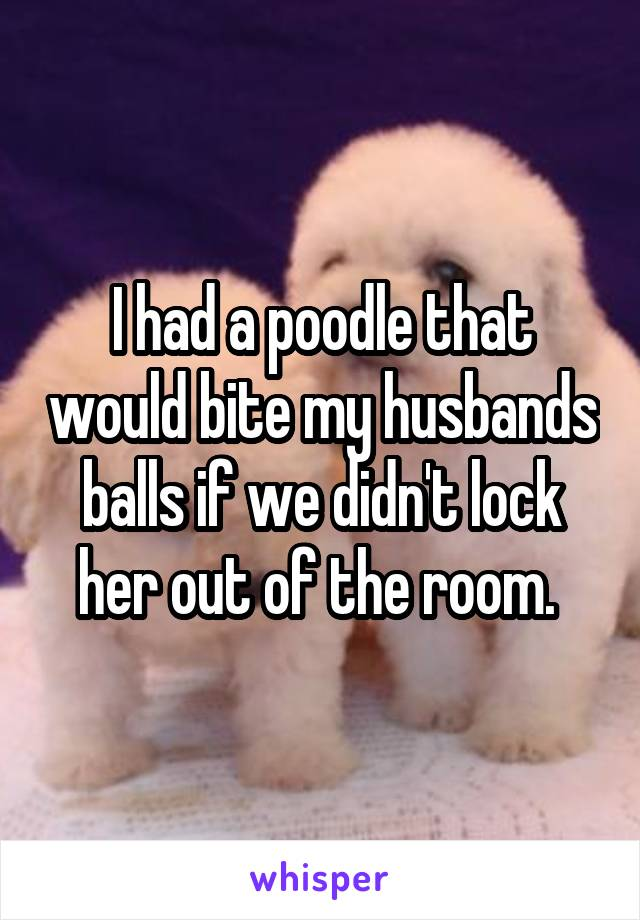 I had a poodle that would bite my husbands balls if we didn't lock her out of the room.