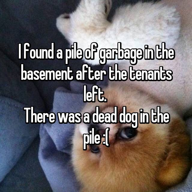 I found a pile of garbage in the basement after the tenants left.  There was a dead dog in the pile :(