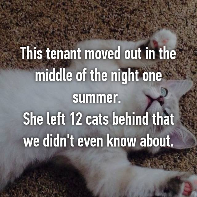 This tenant moved out in the middle of the night one summer.  She left 12 cats behind that we didn't even know about.