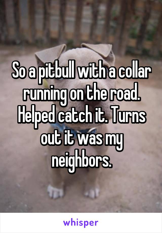 So a pitbull with a collar running on the road. Helped catch it. Turns out it was my neighbors.