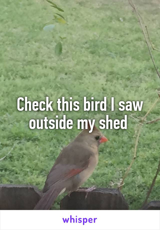 Check this bird I saw outside my shed