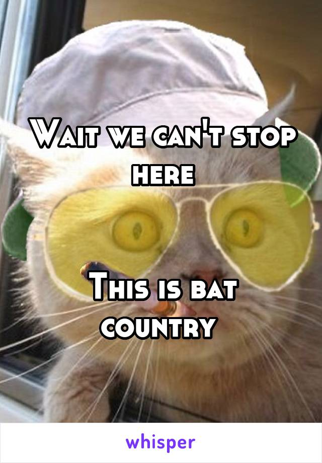 Wait we can't stop here   This is bat country