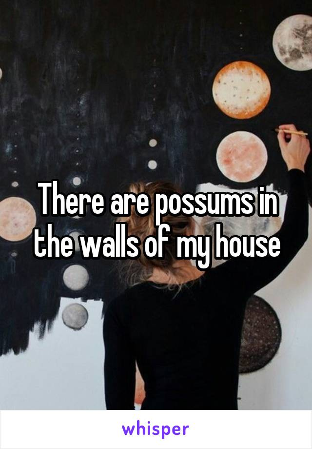There are possums in the walls of my house
