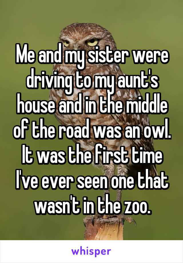 Me and my sister were driving to my aunt's house and in the middle of the road was an owl. It was the first time I've ever seen one that wasn't in the zoo.