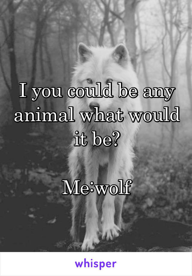 I you could be any animal what would it be?  Me:wolf