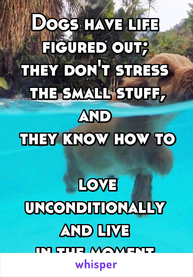 Dogs have life  figured out;  they don't stress  the small stuff, and  they know how to  love unconditionally  and live  in the moment.