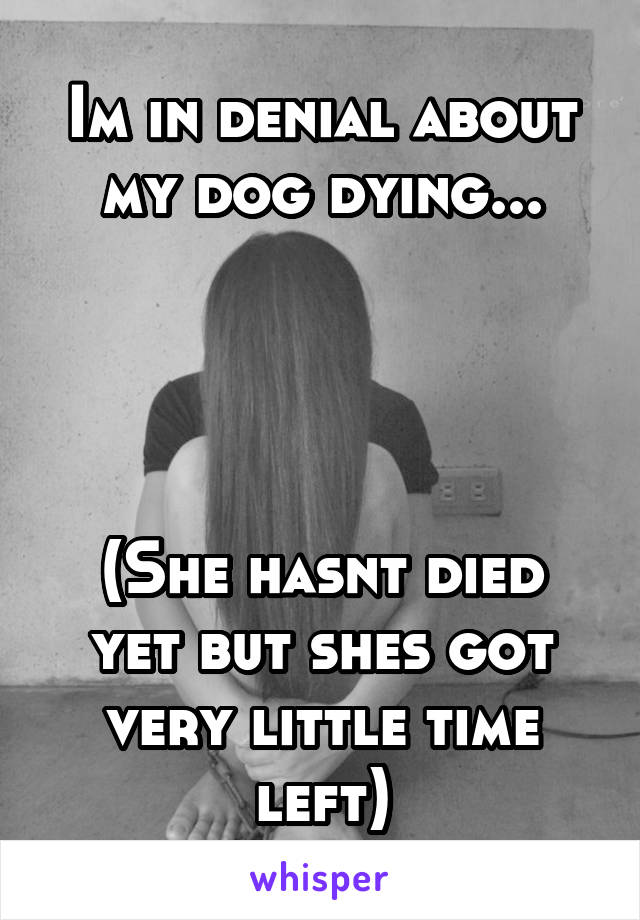 Im in denial about my dog dying...     (She hasnt died yet but shes got very little time left)