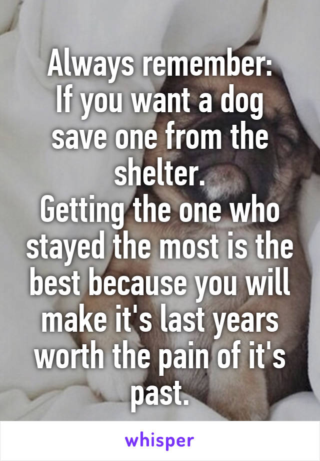 Always remember: If you want a dog save one from the shelter. Getting the one who stayed the most is the best because you will make it's last years worth the pain of it's past.