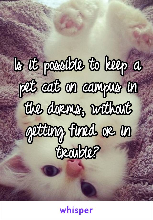 Is it possible to keep a pet cat on campus in the dorms, without getting fined or in trouble?