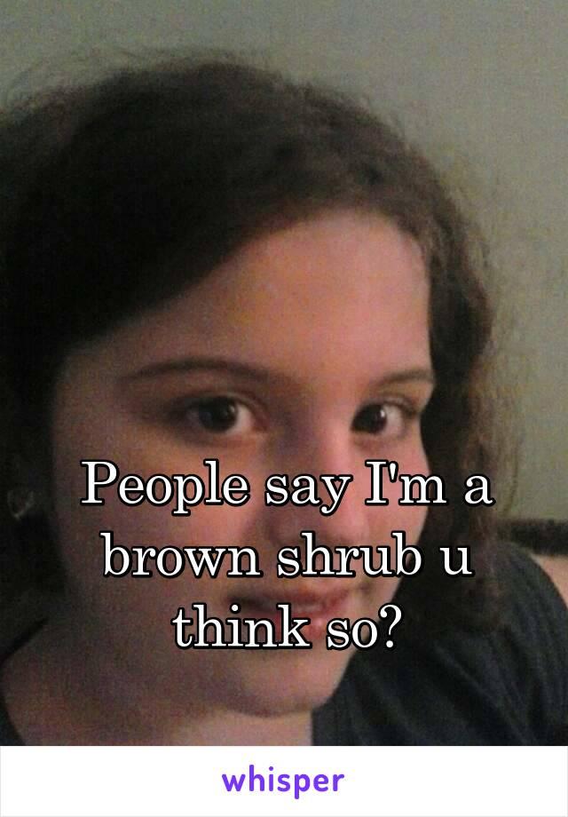 People say I'm a brown shrub u think so?