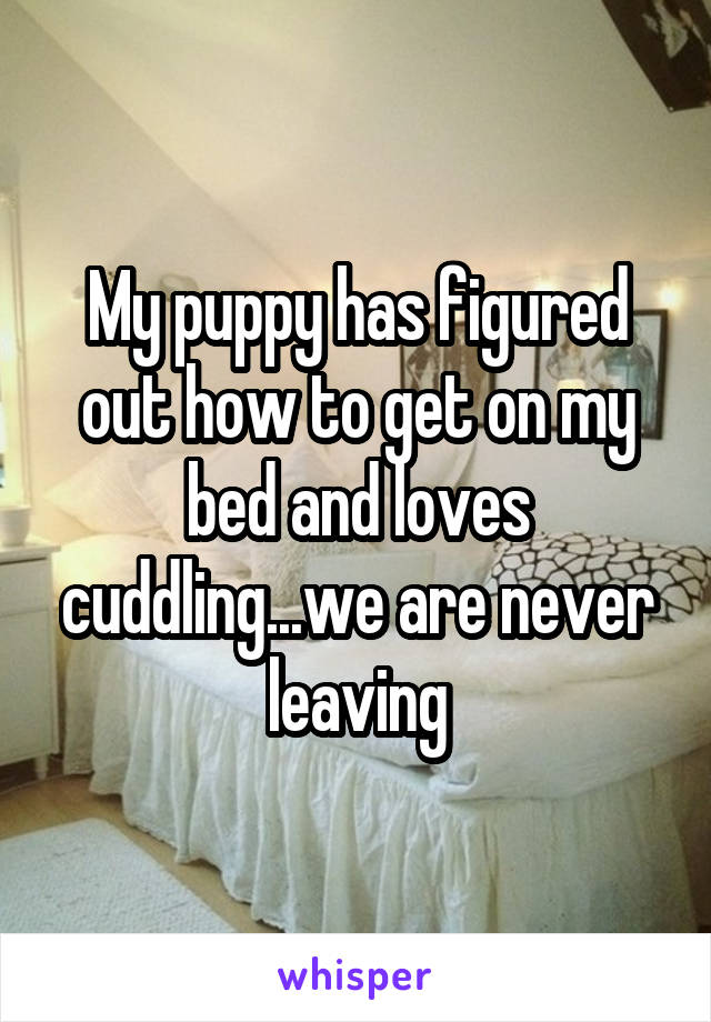 My puppy has figured out how to get on my bed and loves cuddling...we are never leaving