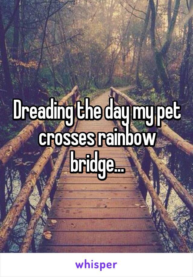 Dreading the day my pet crosses rainbow bridge...