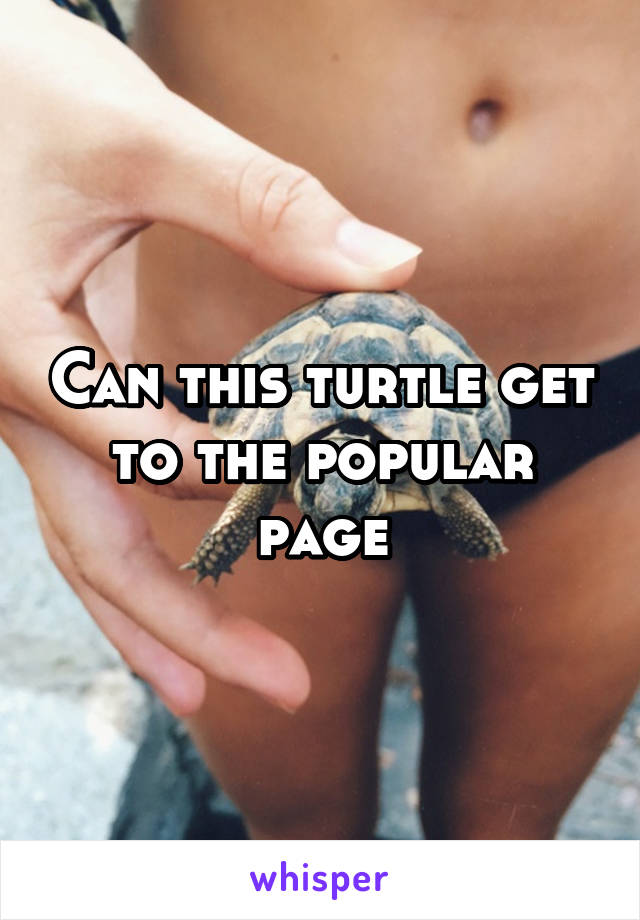 Can this turtle get to the popular page