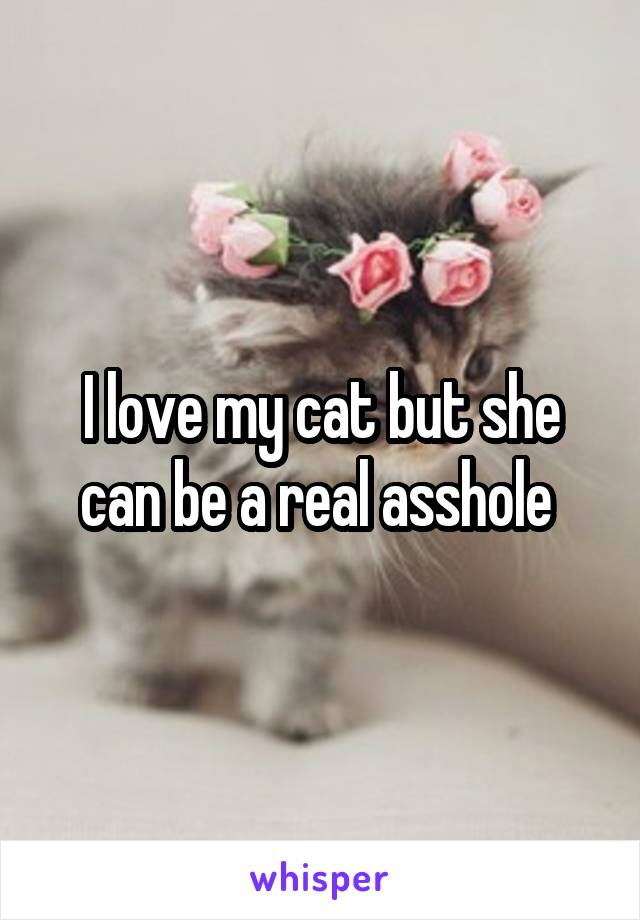 I love my cat but she can be a real asshole