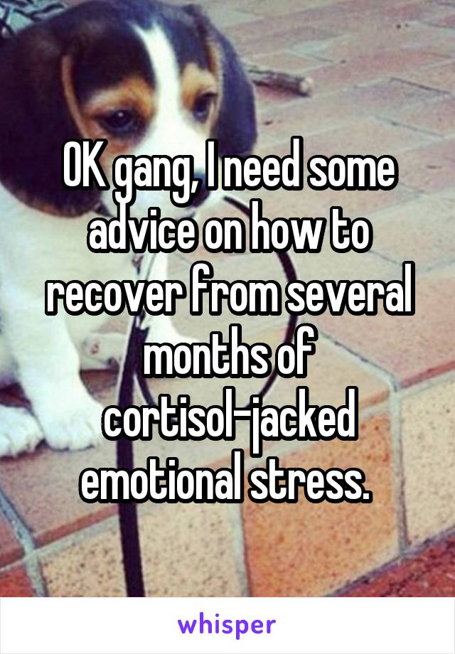 OK gang, I need some advice on how to recover from several months of cortisol-jacked emotional stress.