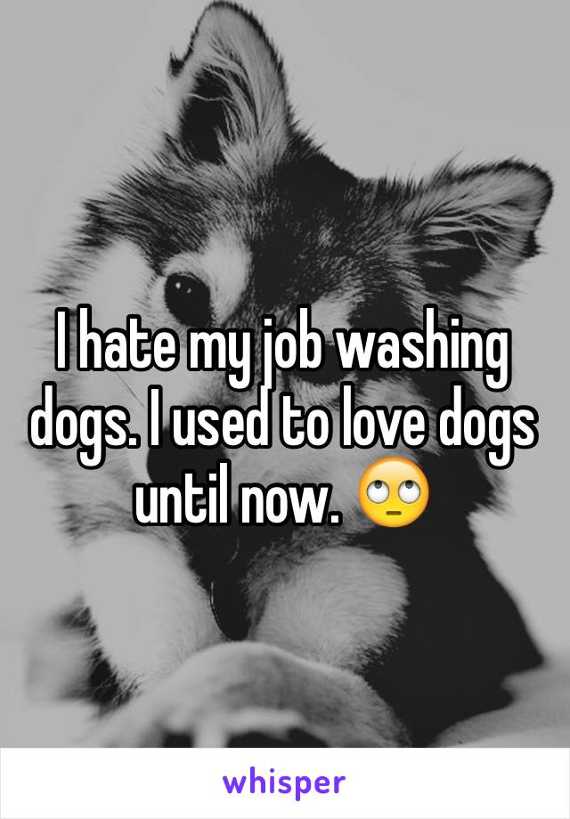 I hate my job washing dogs. I used to love dogs until now. 🙄