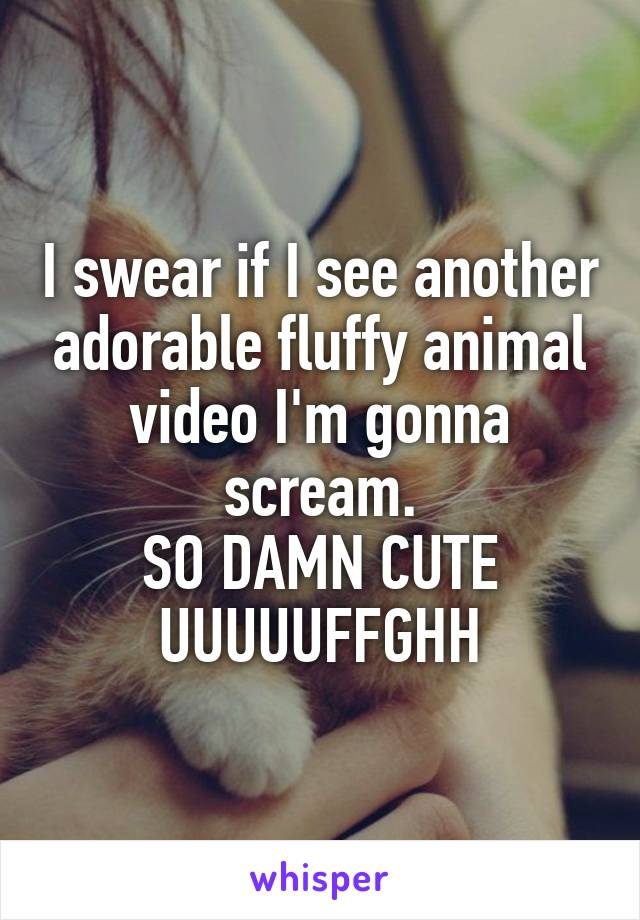 I swear if I see another adorable fluffy animal video I'm gonna scream. SO DAMN CUTE UUUUUFFGHH