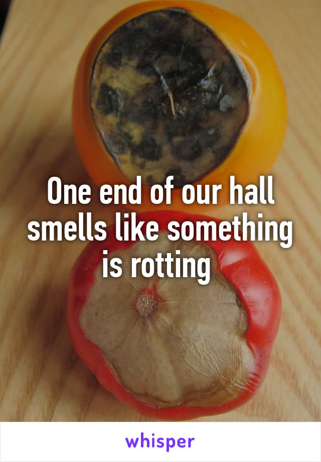 One end of our hall smells like something is rotting