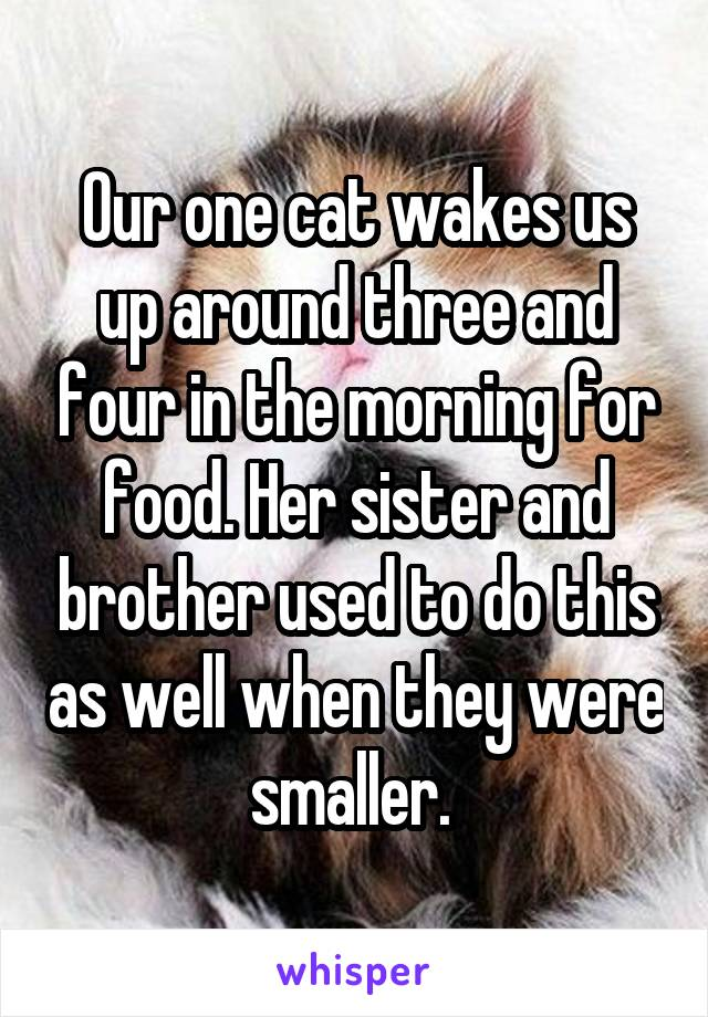 Our one cat wakes us up around three and four in the morning for food. Her sister and brother used to do this as well when they were smaller.