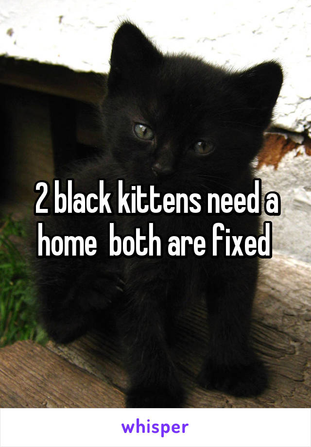 2 black kittens need a home  both are fixed