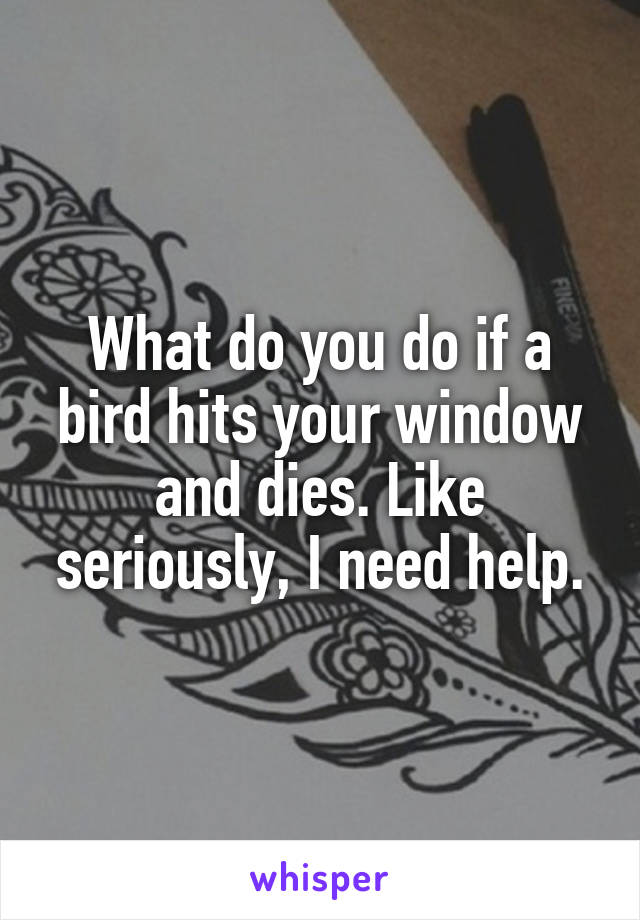 What do you do if a bird hits your window and dies. Like seriously, I need help.