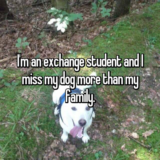 I'm an exchange student and I miss my dog more than my family.