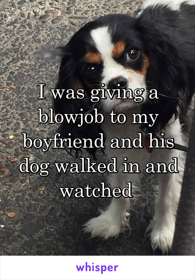 I was giving a blowjob to my boyfriend and his dog walked in and watched
