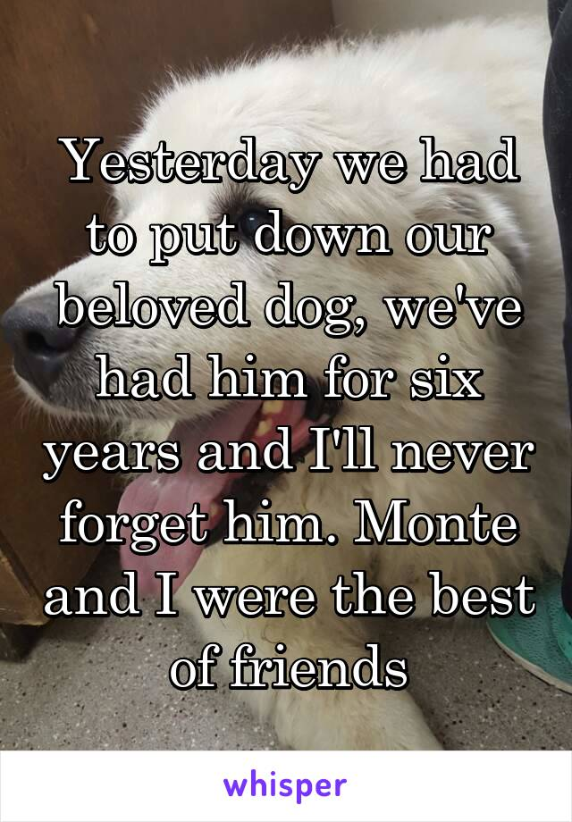 Yesterday we had to put down our beloved dog, we've had him for six years and I'll never forget him. Monte and I were the best of friends
