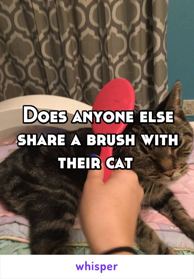 Does anyone else share a brush with their cat