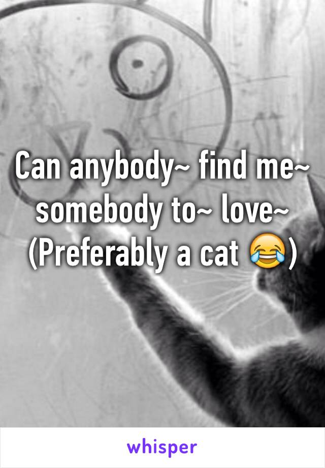 Can anybody~ find me~ somebody to~ love~  (Preferably a cat 😂)