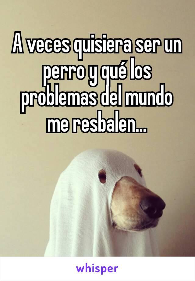 A veces quisiera ser un perro y qué los problemas del mundo me resbalen...