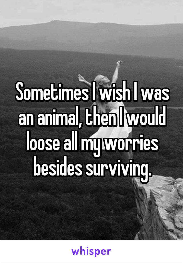 Sometimes I wish I was an animal, then I would loose all my worries besides surviving.