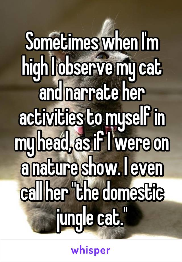 """Sometimes when I'm high I observe my cat and narrate her activities to myself in my head, as if I were on a nature show. I even call her """"the domestic jungle cat."""""""