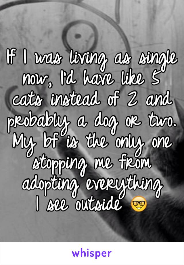 If I was living as single now, I'd have like 5 cats instead of 2 and probably a dog or two. My bf is the only one stopping me from adopting everything I see outside 🤓