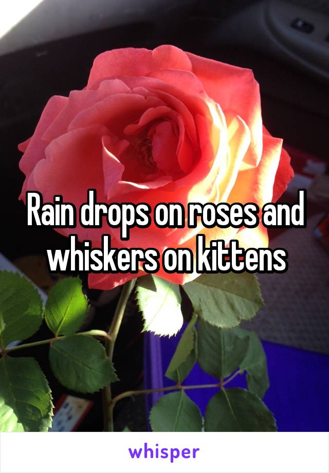 Rain drops on roses and whiskers on kittens