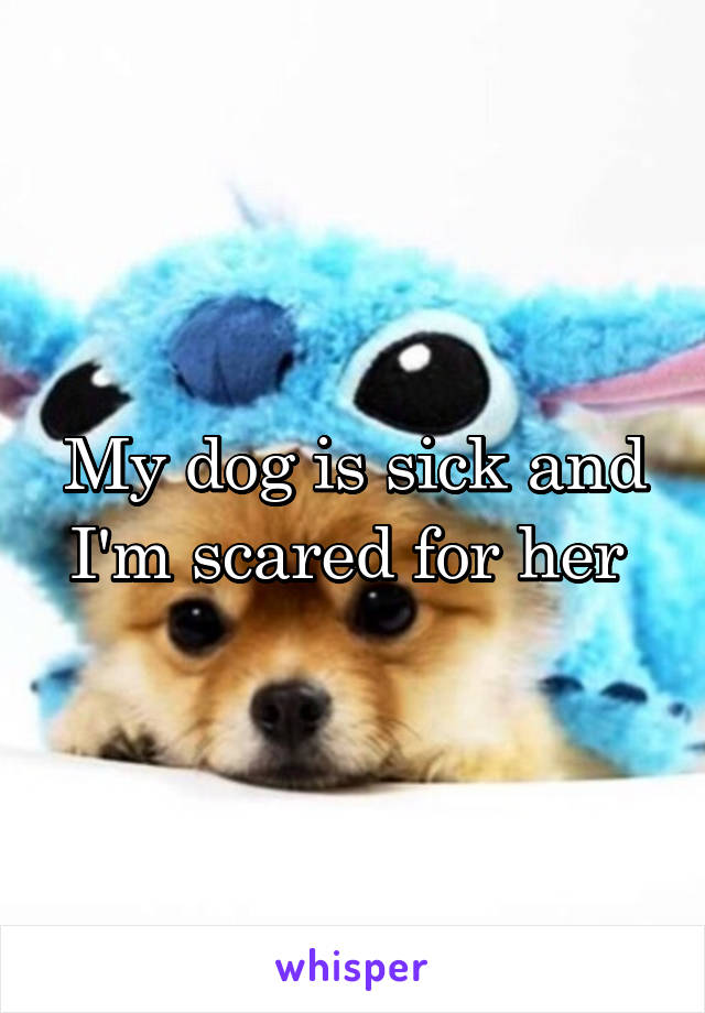 My dog is sick and I'm scared for her