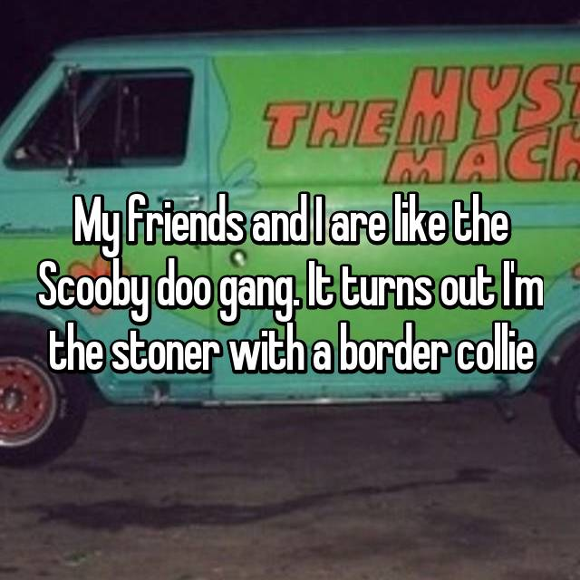 My friends and I are like the Scooby doo gang. It turns out I'm the stoner with a border collie