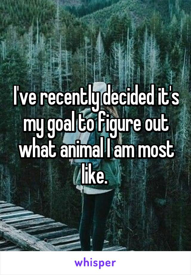 I've recently decided it's my goal to figure out what animal I am most like.